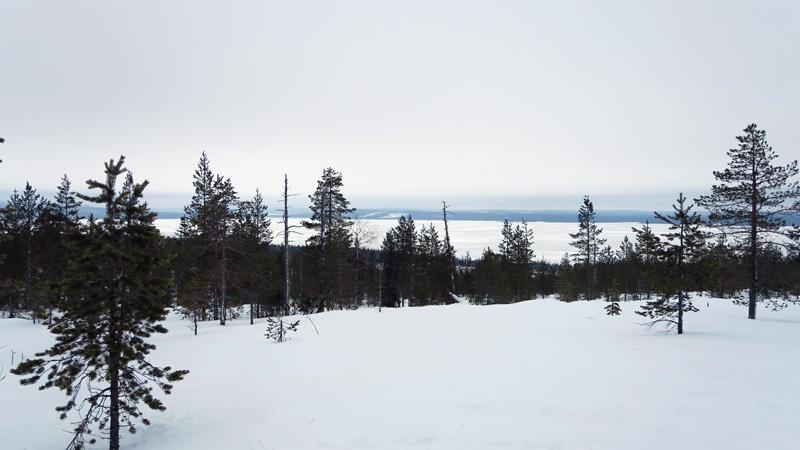 taiga_laponie_finlande
